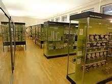 Anatomisches Museum Basel – Wikipedia