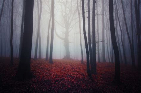 What is eerie? | Macmillan Dictionary Blog